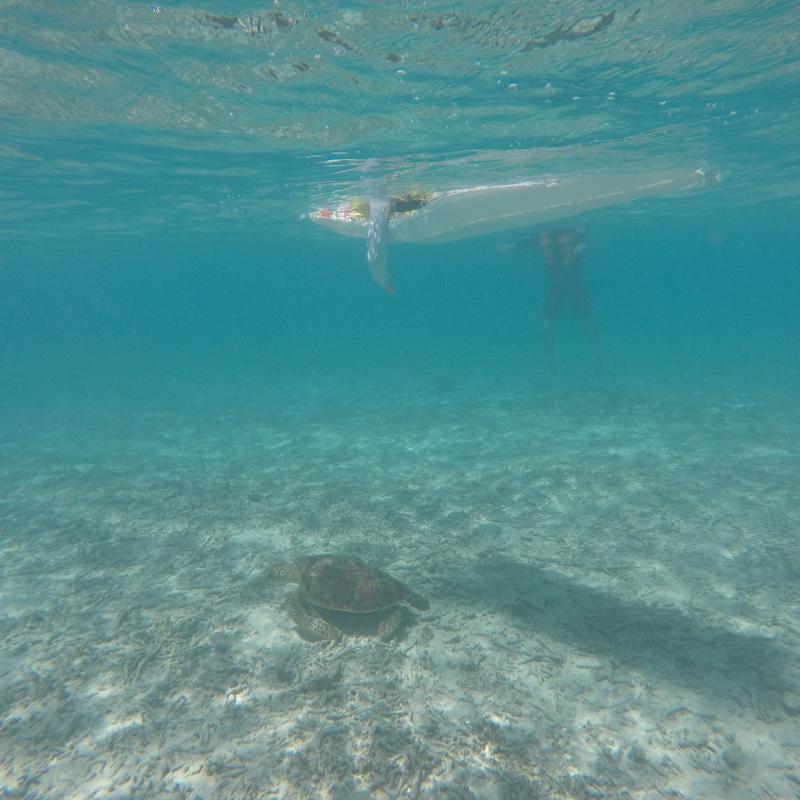 [판매중지]오키나와 본섬의 숨겨진 명소 !! 토카시키섬 토카시쿠 비치 바다거북이 투어!! (점심포함)