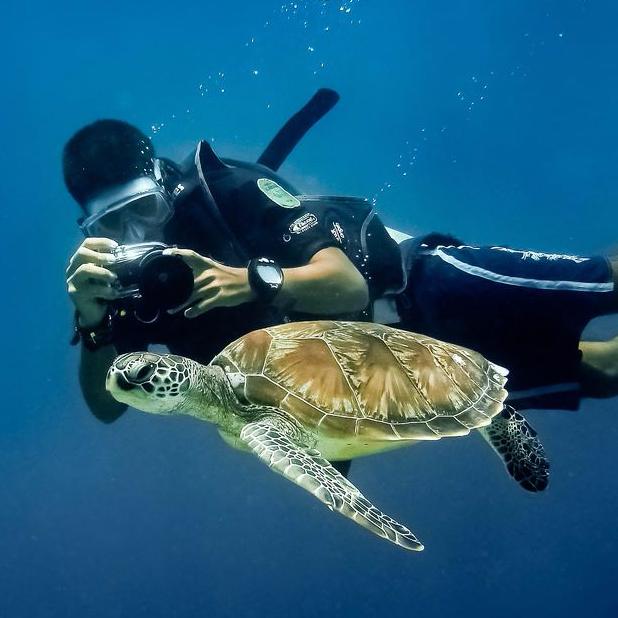케라마에서 바다거북이와 함께하는 스노클링 / 다이빙