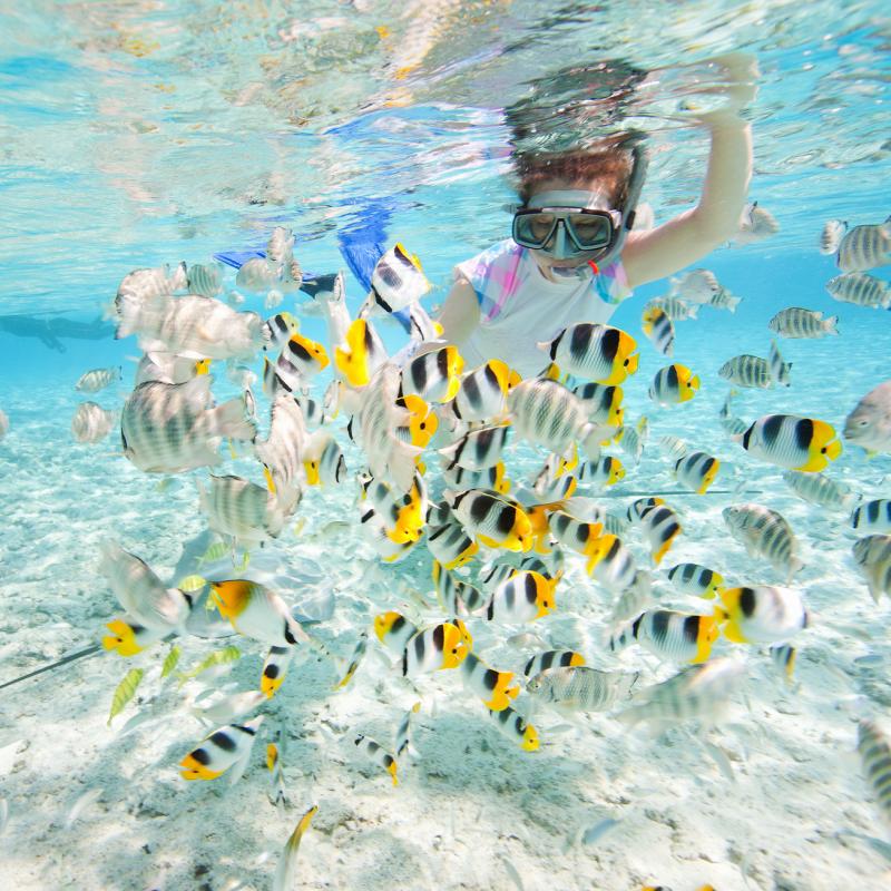 아름다운 푸른 바다 스노클링(3회)
