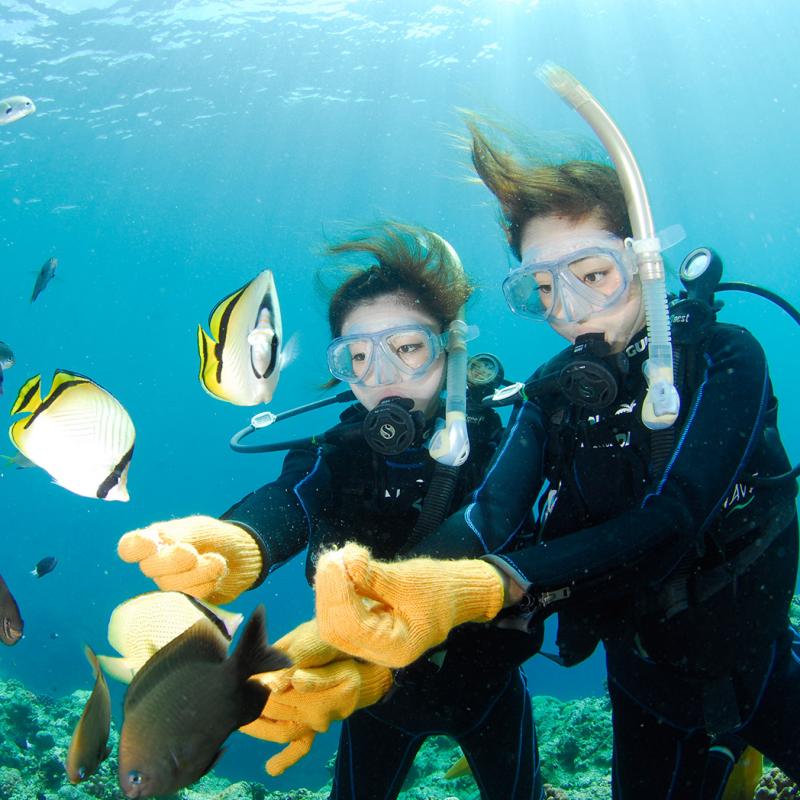 ★카메라렌탈무료★푸른동굴 체험 다이빙 & 열대어 먹이주기 체험 다이빙