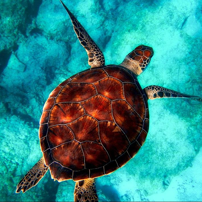 [4월 13일부터 스타트!!] E 플랜 케라마제도 대형 산호초 스노클링&바다거북이 탐색