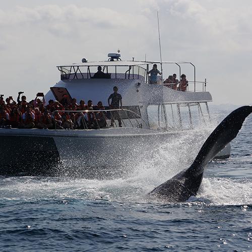 [1/5~1/31 이용자 특가!!]흑등고래 관찰투어! 나하시내호텔 숙박 고객 무료송영!! 기간 한정 챤스를 잡으세요!