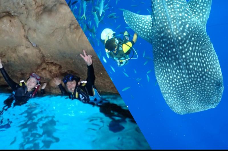 [기노완 출발] 고래상어+푸른동굴 스노클링 셋트 플랜!!