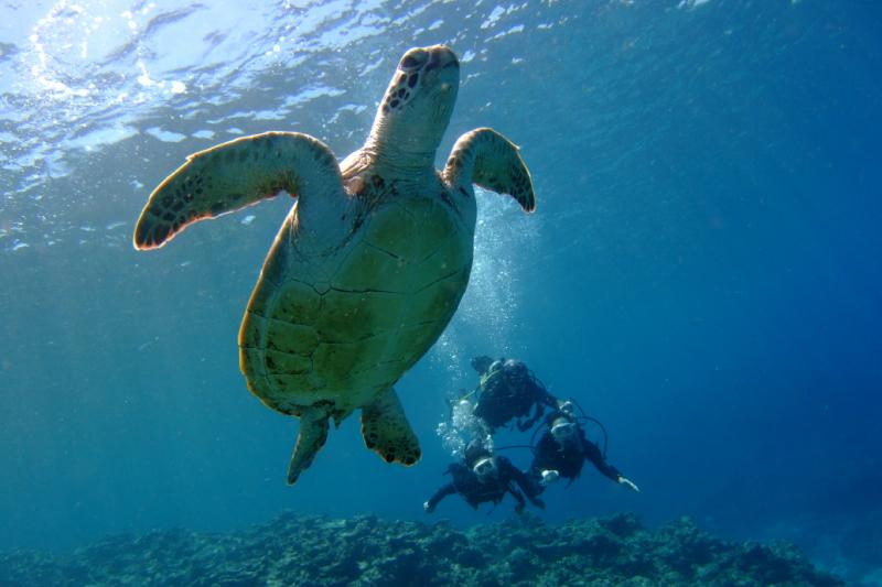 美丽国度庆良间(Kerama)群岛周边海域三定点!体验浮潜‧深潜‧FUN潜水活动(中文服务‧整日行程)
