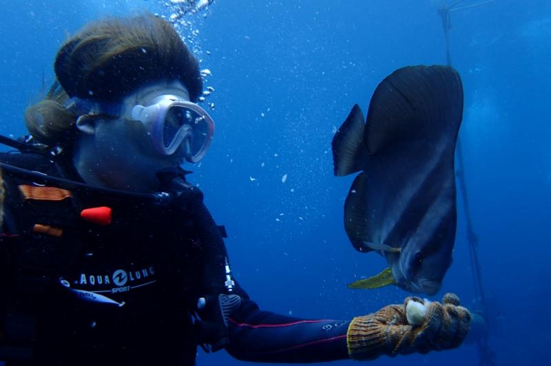 【恩納村出航】輕鬆搭乘遊艇前往~青洞與可愛魚群同游體驗浮潛或潛水行程!!可選擇自行前往或那霸市酒店接送★