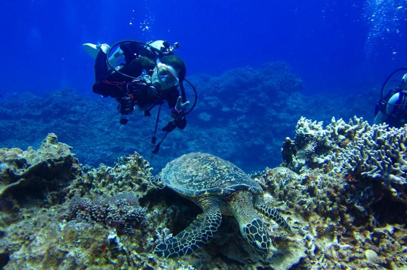 [차탄출발/케라마/체험다이빙/4시간/오전&오후편] 오키나와 케라마 치비시 포인트에서 반나절  체험다이빙 플랜