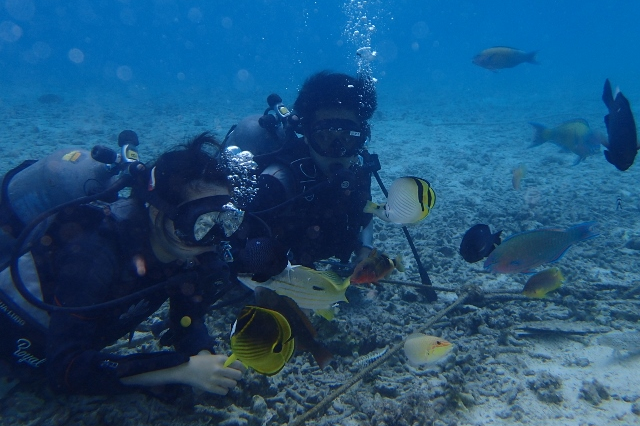 【Bプラン】水納島日帰り海水浴&体験ダイビングorパラセーリング