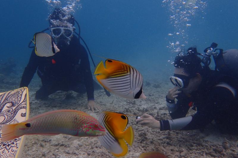 B1:【민나섬】【해수욕+해변 체험다이빙+점심】
