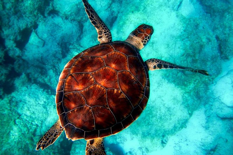 E 플랜 케라마제도 대형 산호초 스노클링&바다거북이 탐색