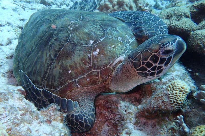 【慶良間諸島】Eプラン 大サンゴ礁シュノーケリング&ウミガメ探検ツアー