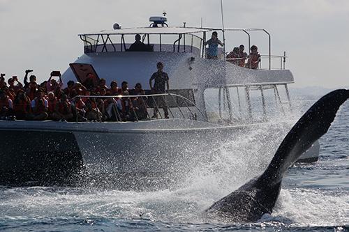 【那霸出发】冲绳半天观鲸行程!