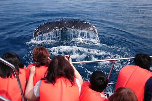 흑등고래 관찰투어! 나하시내호텔 숙박 고객 무료송영!! 기간 한정 챤스를 잡으세요!