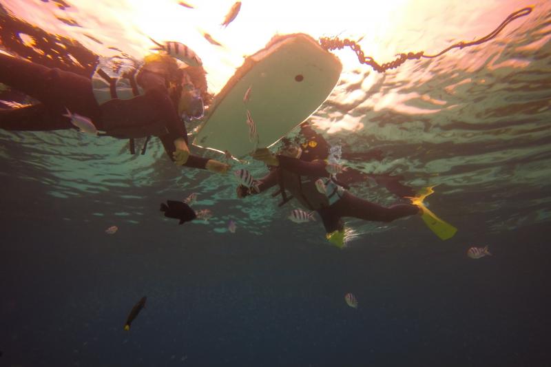 【세소코비치】【마린2팩】 투명한 바다에서  즐기는 내가 선택하는 마린2팩 투어