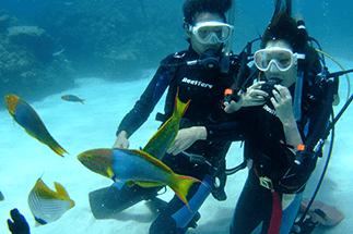 庆良间诸岛体验潜水一天行程