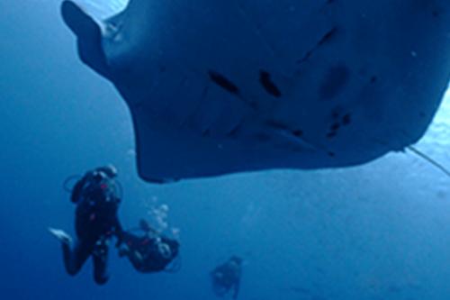 [스노클링/체험다이빙/펀다이빙]온 가족이 함께 즐길 수 있는 해양스포츠