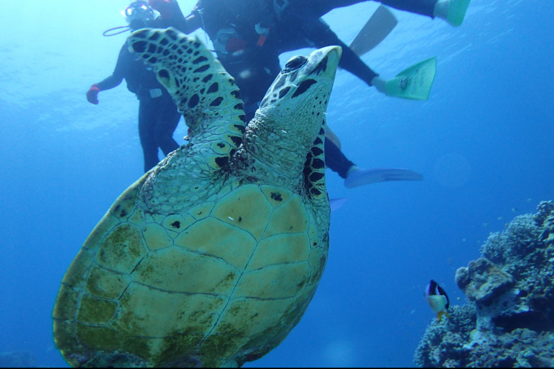 【那霸出发】庆良间体验潜水一天行程!