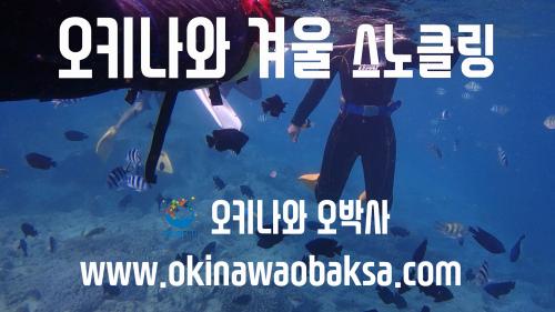 오키나와 겨울 스노클링 다이빙